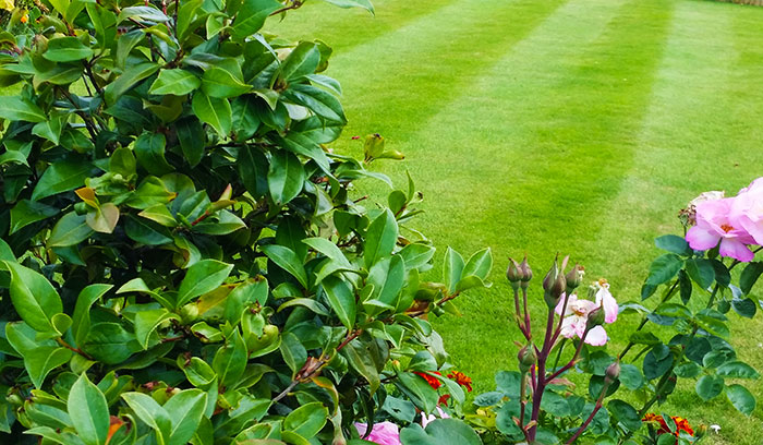 Plant In Garden Maintenance Preston Garden Services in Preston